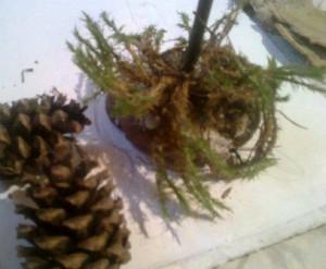 новогодние поделки из природного материала