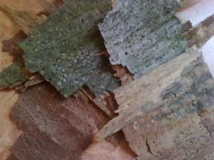 делаем поделки из природного материала