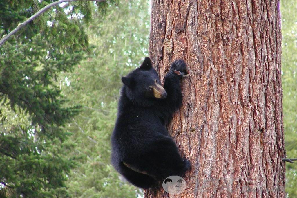 детские загадки про медведя 3