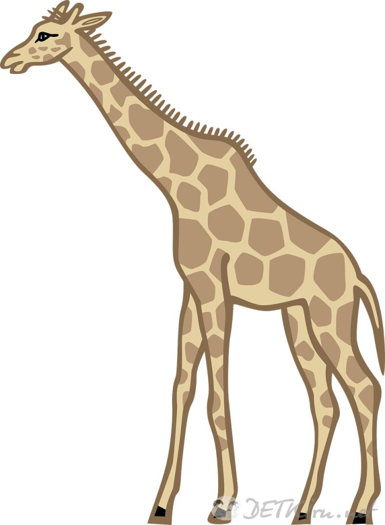 жираф картинки для детей 1