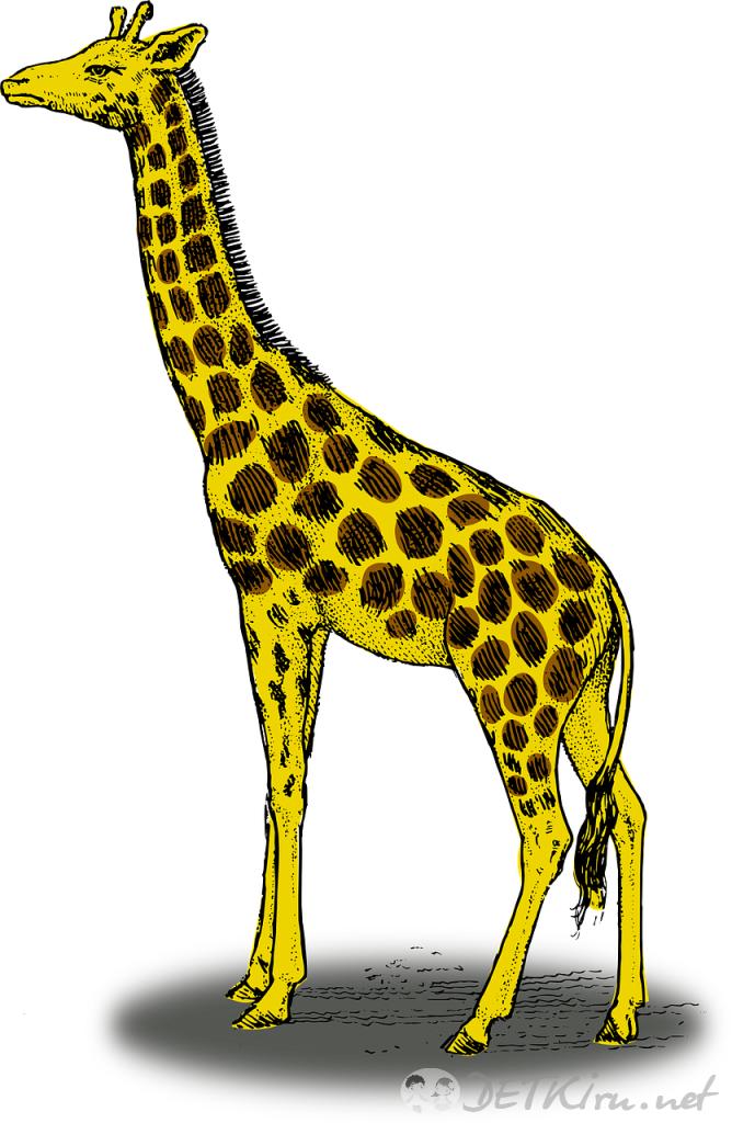 жираф картинки для детей 4