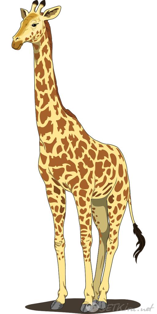 жираф картинки для детей 6