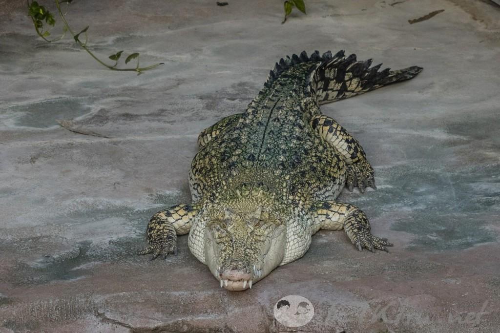 загадки с подвохом для детей - крокодил (фото)