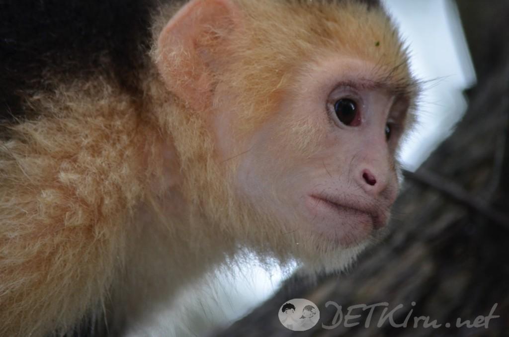 загадки с подвохом для детей - обезьяна (фото)