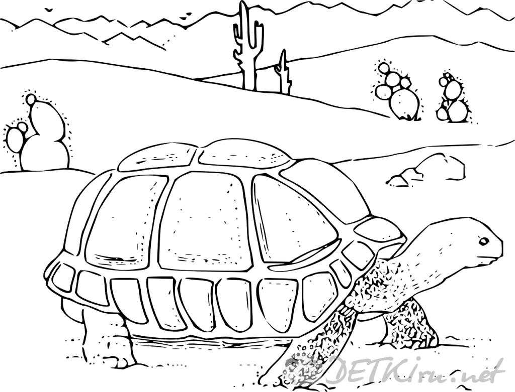 черепаха картинки для детей, раскраска