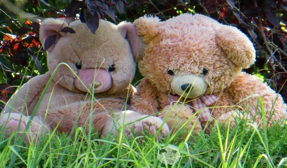 медвежата, стихи о мишке игрушке