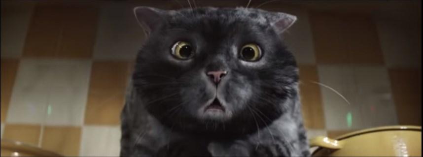 рождественский кот видео