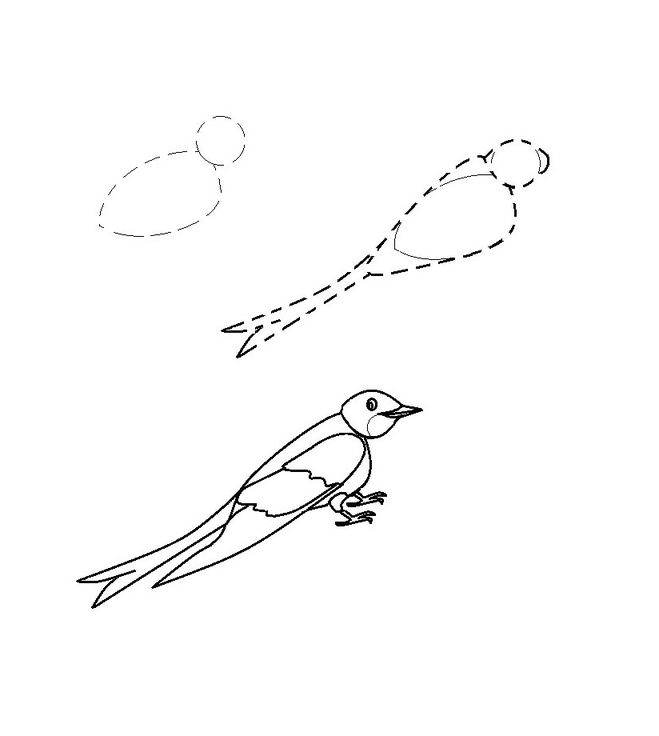 Как нарисовать ласточку поэтапно: 10 вариантов