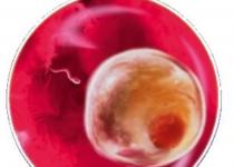 1 неделя беременности - онлайн-журнал