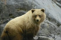 Детские загадки про медведя