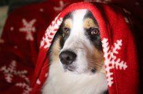 Картинки-открытки на Новый год — собаки, ТОП-20 самых симпатичных!