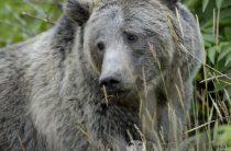 Медвежья весна. Стих для детей про медведя