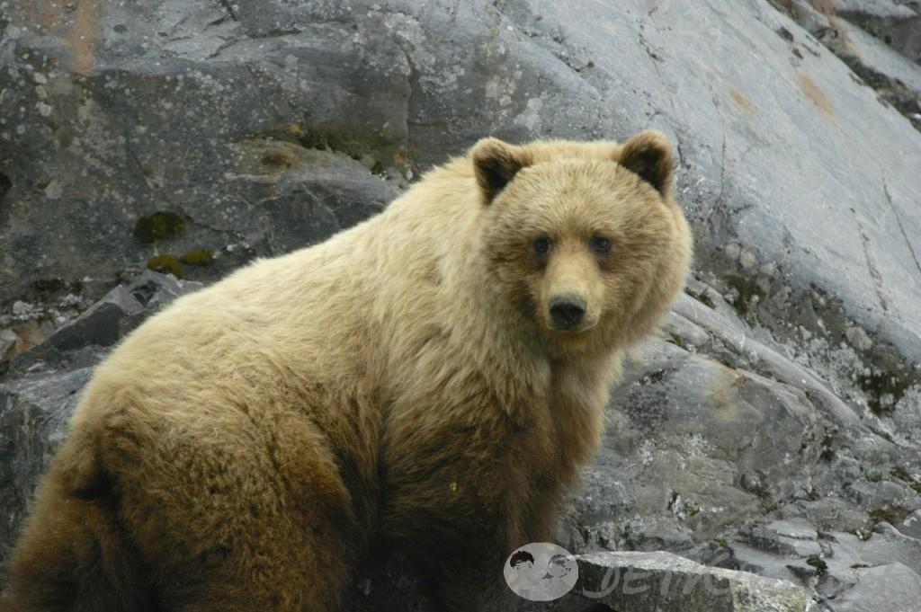 детские загадки про медведя 2