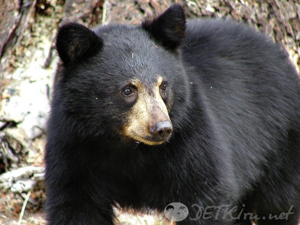детские загадки про медведя 4