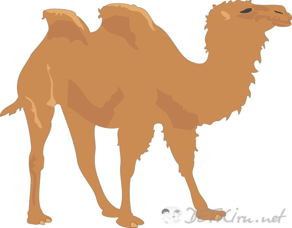 верблюд картинки для детей 4