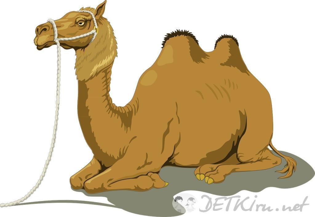 верблюд картинки для детей 5
