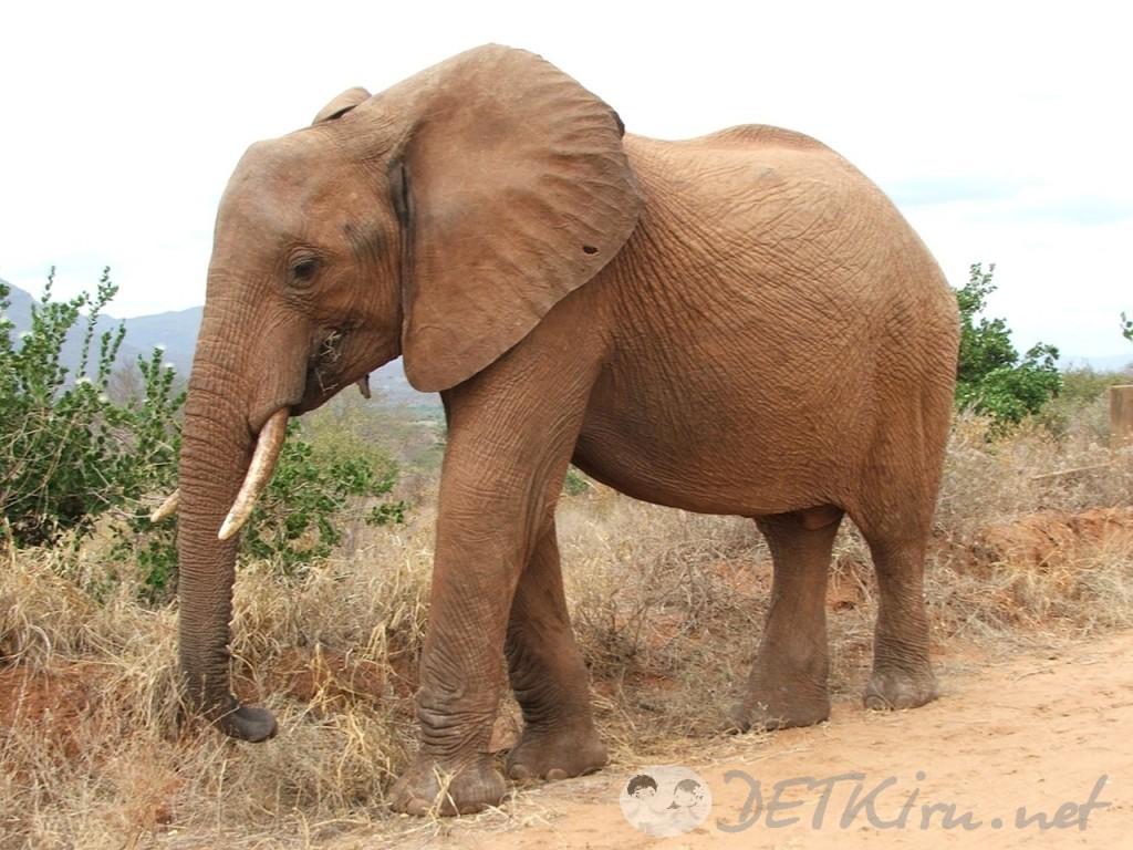 загадки с подвохом для детей - слон (фото)