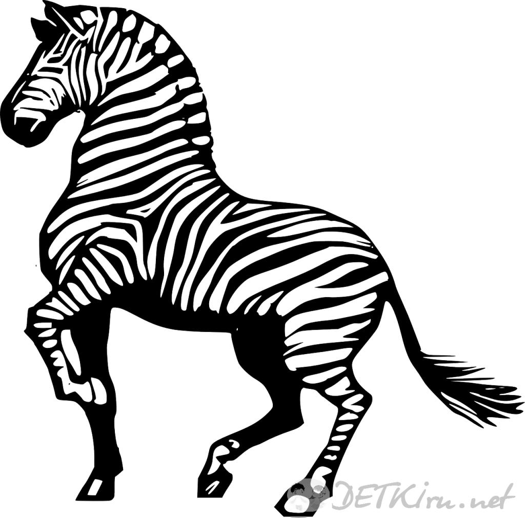 зебра картинки для детей