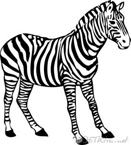 зебра картинки для детей 3