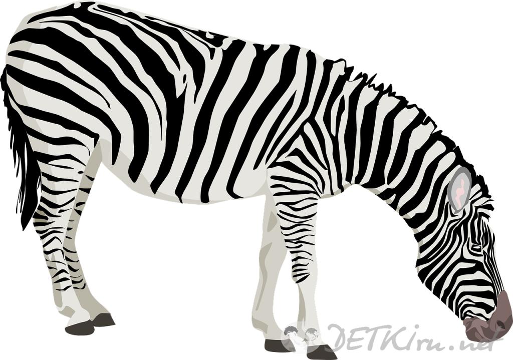 зебра картинки для детей 4