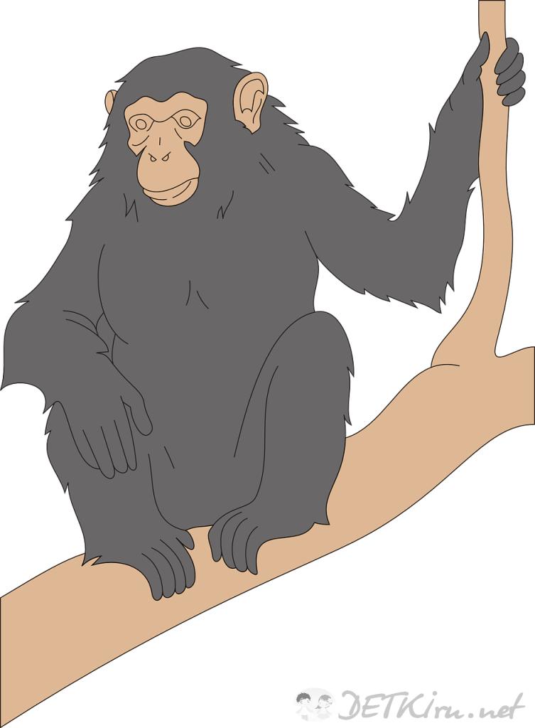 обезьяна картинки для детей 1