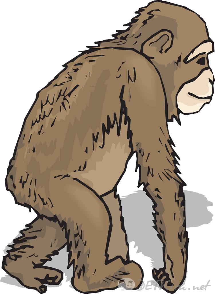 обезьяна картинки для детей 2