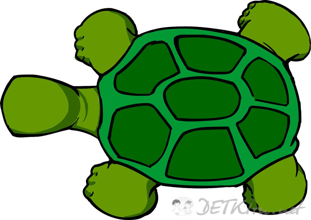 черепаха картинки для детей