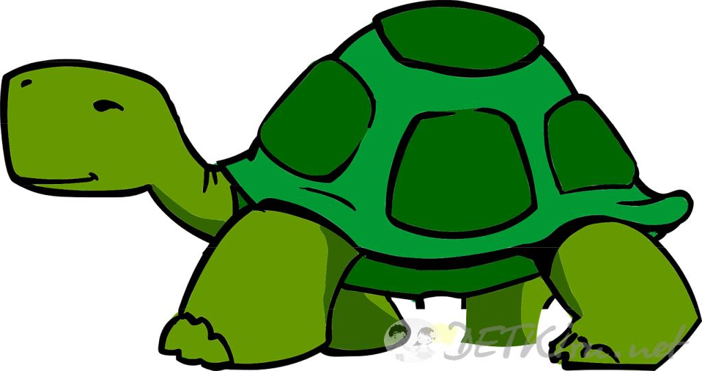 черепаха картинки для детей 3