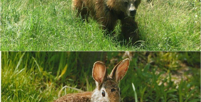 Случай в лесу. Короткий стих про медведя