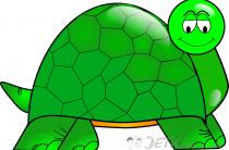 Черепаха. Картинки для детей