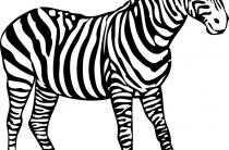 Зебра. Картинки для детей