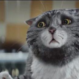 Рождественский кот видео — добрый и красивый ролик к Новому году и Рождеству!