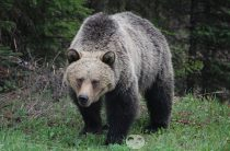 Почему медведь испугался? Маленький смешной рассказ о медведе для детей