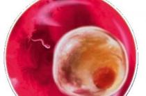 1 неделя беременности — онлайн-журнал
